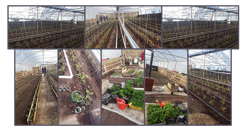 The greenhouse that was constructed at Dzorak last year in use. A floral business is being developed involving the residents of Dzorak with special needs and capable of working.